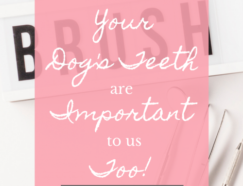 Your Dog's Teeth Are Important To Us Too!