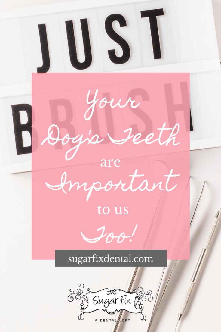 Sugar Fix Dog's Teeth Blog